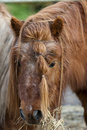 Pony with a braid mane Royalty Free Stock Images