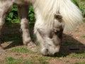 Pony head closeup on farm Stock Photos