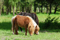 Pony horses in pasture Stock Images