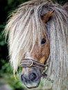 Pony portrait of outdoors in summer Stock Image