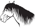 Pony profile contour image of a muzzle Royalty Free Stock Images