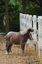 Pony small hairy in fence Royalty Free Stock Photos