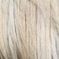 Pony white mane textured fur image taken at animal farm Royalty Free Stock Photos