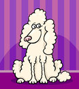 Poodle dog cartoon illustration Royalty Free Stock Photography