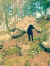 Poodle exploring old wolf home in the swedish forest Stock Images