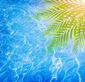 Poolside on tropical beach closeup fresh green palm tree leaves border beautiful clean water background pool the luxury spa resort Stock Photos