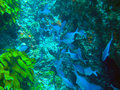 Poor knights islands marine reserve underwater diving in tutukaka coast new zealand Royalty Free Stock Photo
