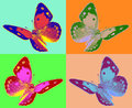 Pop art colias butterfly Royalty Free Stock Photo