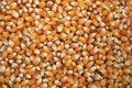 Popcorn kernels Royalty Free Stock Photo