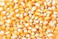 Popcorn Kernels unpopped Royalty Free Stock Photo