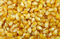 Popcorn Seed Background Stock Photography