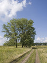 Poplar near the road Royalty Free Stock Image