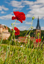 Poppies in Beaujolais, France Royalty Free Stock Photo