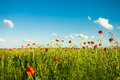 Poppies field over blue sky with clouds Royalty Free Stock Photos