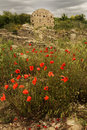 Poppies in front of Turkish Ancient Ruins Royalty Free Stock Photo