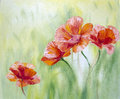 Poppies,  oil painting Royalty Free Stock Image