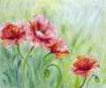 Poppies,  oil painting Royalty Free Stock Photo