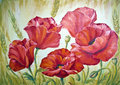 Poppies, oil painting on canvas Royalty Free Stock Photo
