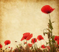 Poppies paper texture with red Royalty Free Stock Photos