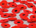 Poppies At Remembrance Day Ser...