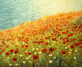 Poppies at the Seashore Royalty Free Stock Images
