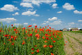 Poppy, clouds and arable field Royalty Free Stock Photo