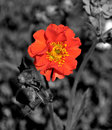 Poppy Colour Pop Stock Images
