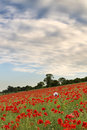 Poppy fields landscape summer sunset Royalty Free Stock Image