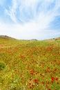 Poppy fields of Prevelhi Royalty Free Stock Photo