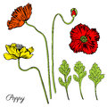 Poppy flower, bud, leaves vector engraving sketch hand drawn isolated on white, vintage romantic style for greeting card Royalty Free Stock Photo