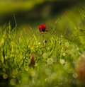 Poppy flower in nature summer day Stock Images
