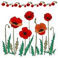 Poppy flower set. Vector illustration. Hand drawing in the style of doodling
