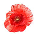 Poppy flower watercolor image of red isolated on white background Royalty Free Stock Photography