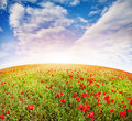 Poppy flowers field on the at spring time in kazakhstan central asia Stock Image