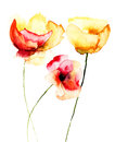 Poppy flowers red watercolor illustration Stock Photo