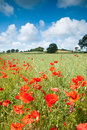 Poppy Hill Royalty Free Stock Photography