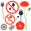 Poppy isolated objects on white background vector illustration eps Stock Photography