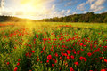 Poppy meadow landscape Royalty Free Stock Photo