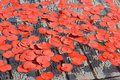 Poppy petals during Silence in the Square event Royalty Free Stock Photography