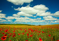 Poppy and rape field with cloud landscape Royalty Free Stock Image