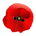 Poppy red gradient one made fill Stock Photo