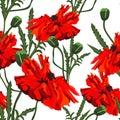 Poppy . Seamless pattern on dark background. Vector Illustration