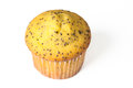 Poppy Seed Muffin Royalty Free Stock Photo
