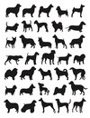 Popular dog breeds Stock Images