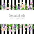 Popular essential oil plants label set on black stripes