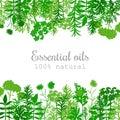 Popular essential oil plants label set in green. Flat