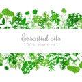 Popular essential oil plants label set in green.