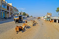 On porbandar street january gujarat traffic and cows of indian town gujarat Stock Photography