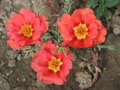 Porcelain micronesian nature flowers flowering summer orange decoration tenderness Royalty Free Stock Photos