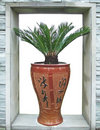 Porcelain vase and sago cycad Royalty Free Stock Photo